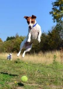 pienso para perros, energia a tu mascota
