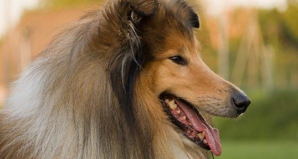 chuches perro