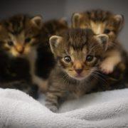 kittens-1824367_640